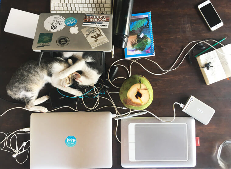The typical setup in the day of a kiteboarding digital nomad: cats, coconuts and tropical coworking