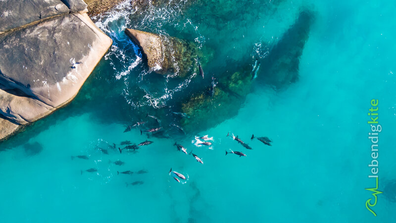 Kitesurfing in Western Australia – with Wildlife like Dolphins